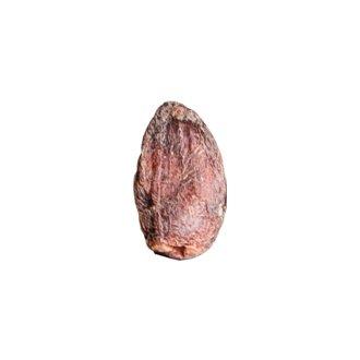 Fava di cacao Giraudi